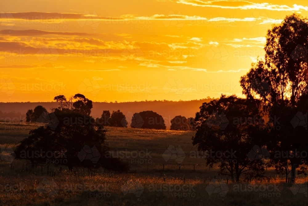 Golden colours of countryside in southern Queensland - Australian Stock Image