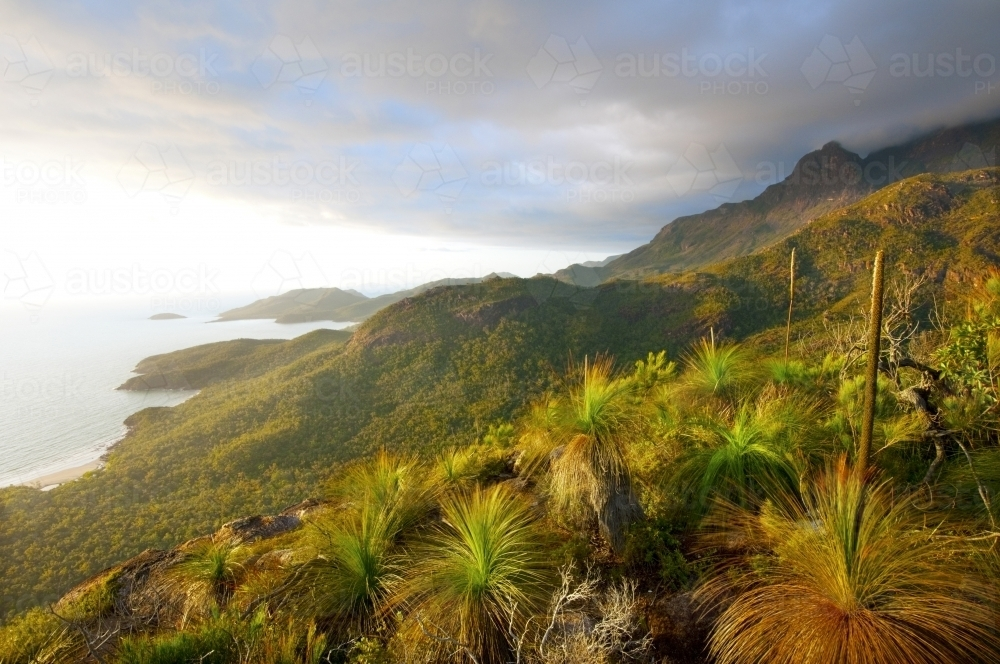 Grass trees on the side of a mountain overlooking the coast - Australian Stock Image