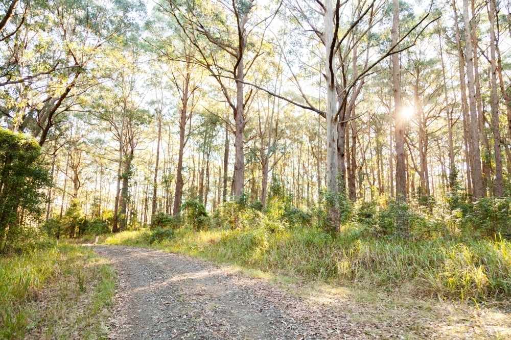 Gravel driveway onto property in forested hill country - Australian Stock Image