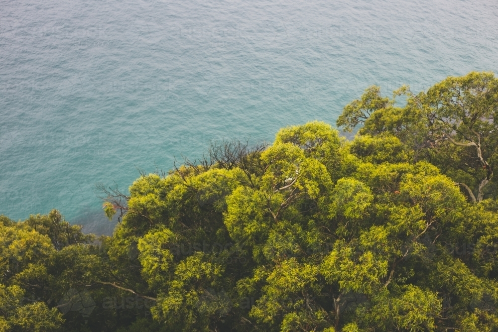 Green and gold canopy of trees with ocean in background - Australian Stock Image