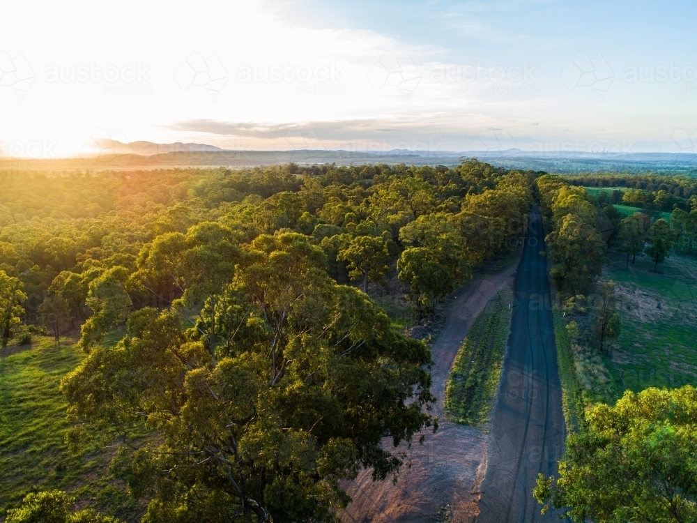 Green gum trees lining rural country road in afternoon light with farm paddock beside - Australian Stock Image