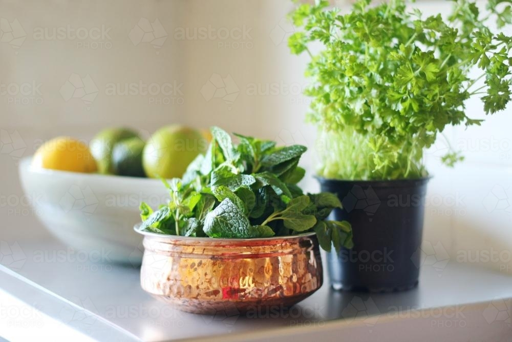 Green mint and parsley herbs on a bench inside - Australian Stock Image