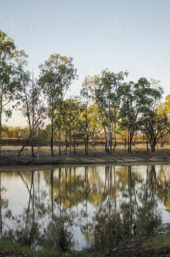 Gumtree's reflected in still river - Australian Stock Image
