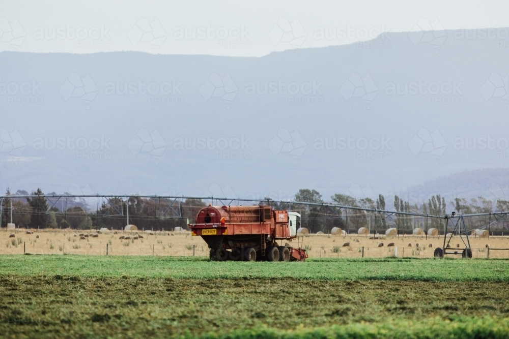 harvester in paddock with peas - Australian Stock Image