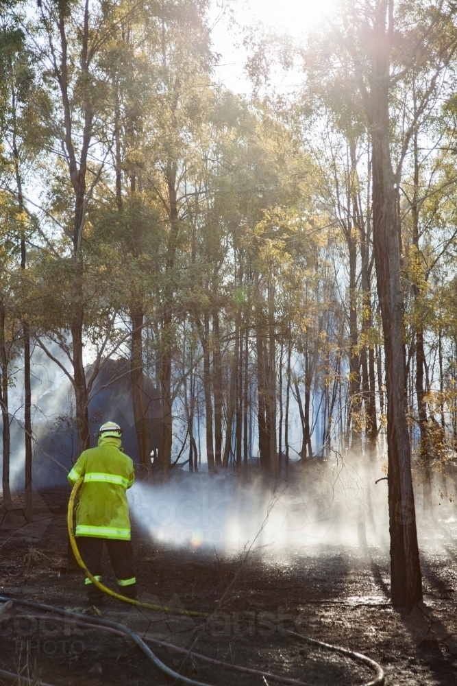 Heroic firefighter hosing out flames to contain bushfire - Australian Stock Image
