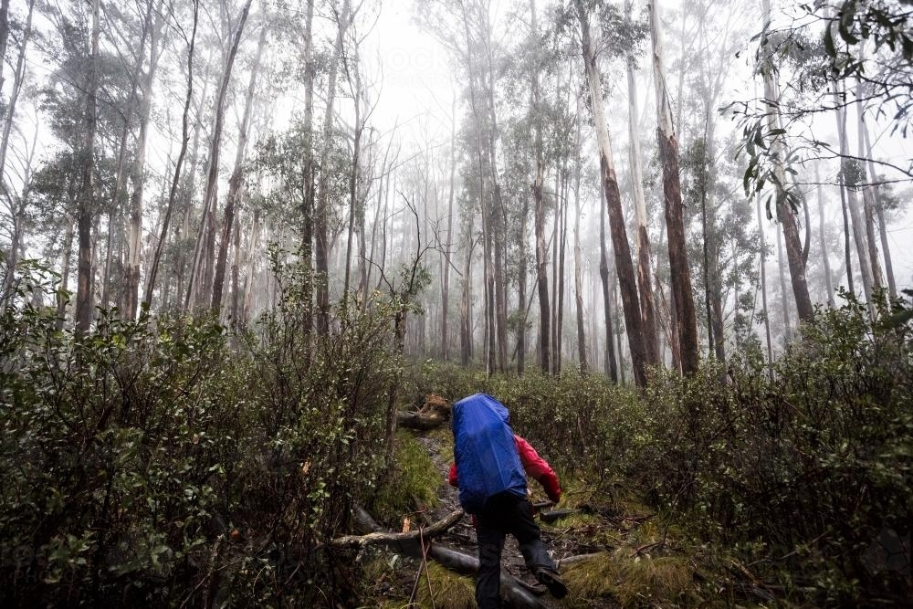 Hiking through the trees at Mount Bogong - Australian Stock Image