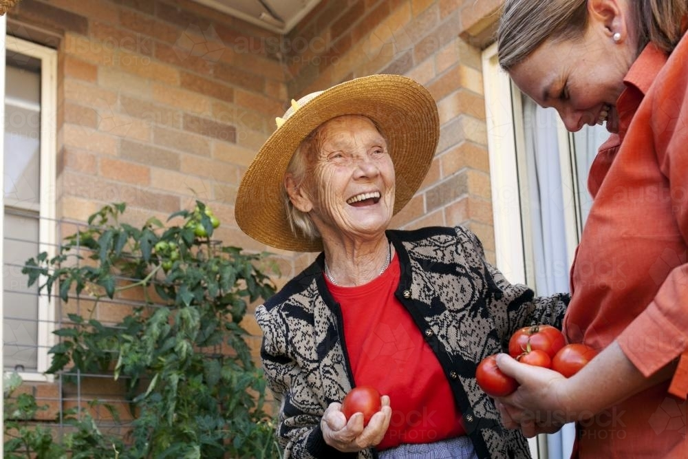 Laughing elderly lady picking tomatos from the garden with carer at an aged care facility - Australian Stock Image
