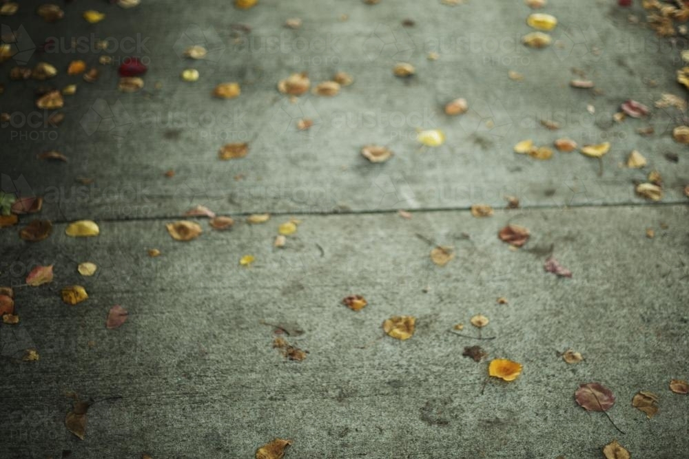 Leaves on Footpath - Australian Stock Image