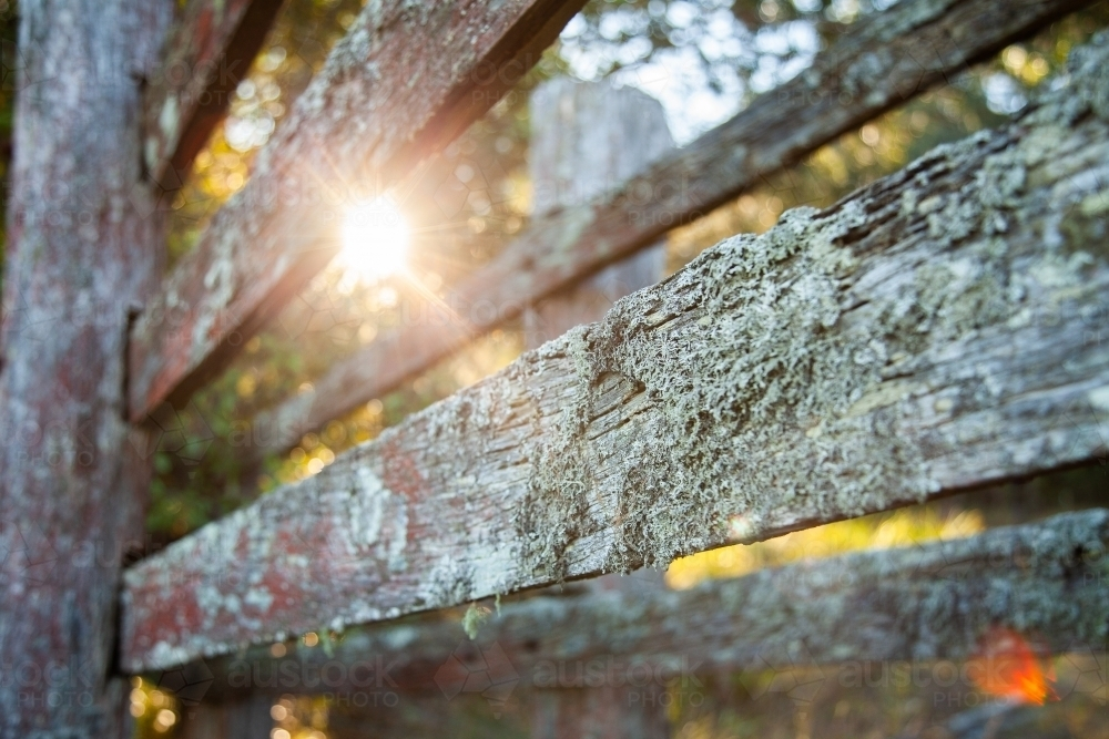 Lichen covered cattle chute, old wooden rails - Australian Stock Image