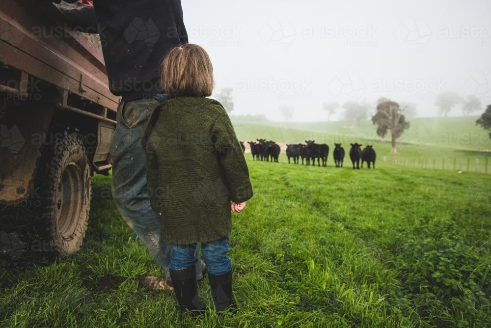 Little girl & father watching cattle - Australian Stock Image