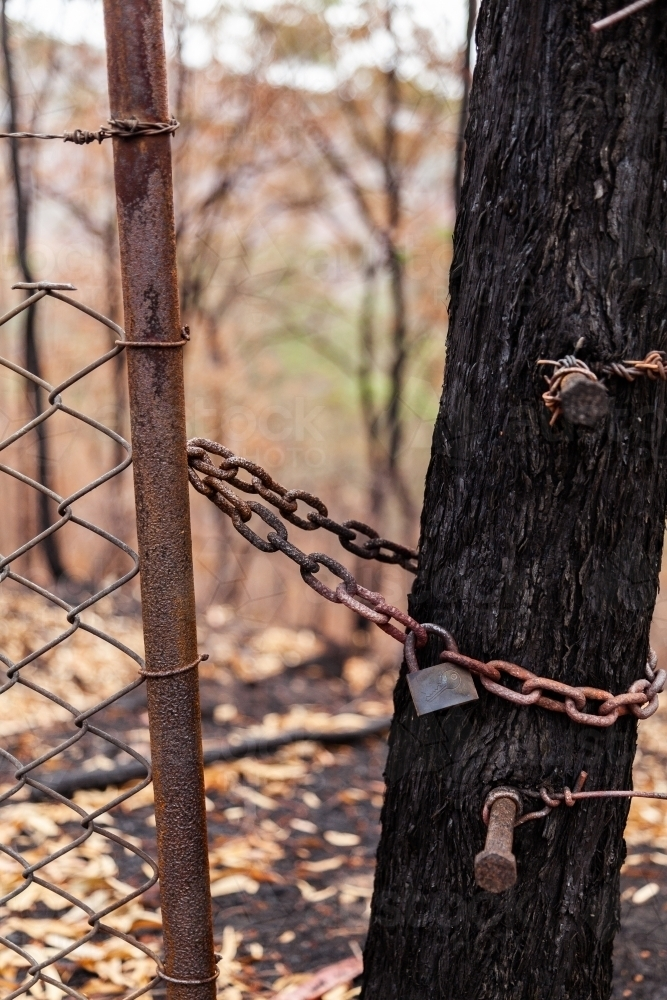 Lock and chain on gate next to tree burnt by bushfire - Australian Stock Image