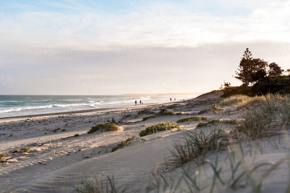 Looking over the top of soft sand dunes and beach grass towards the ocean. - Australian Stock Image