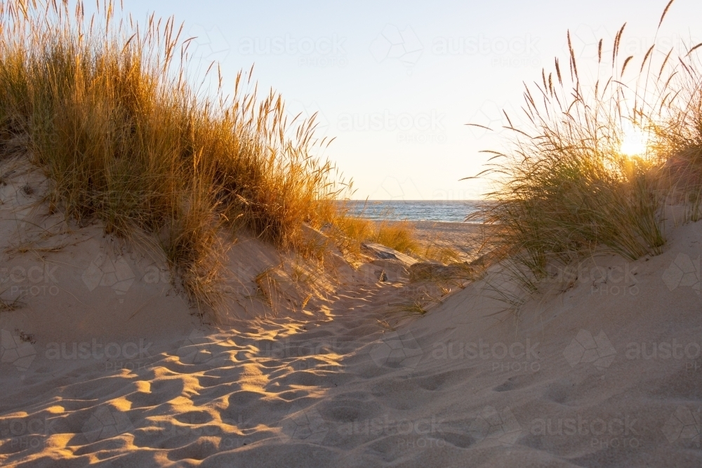 looking through dune grasses on sand dune to the ocean - Australian Stock Image