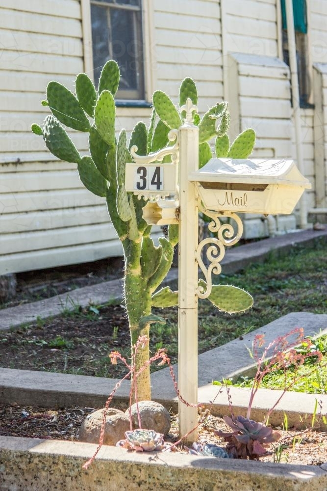 Mailbox with a prickly pear plant growing next to it - Australian Stock Image