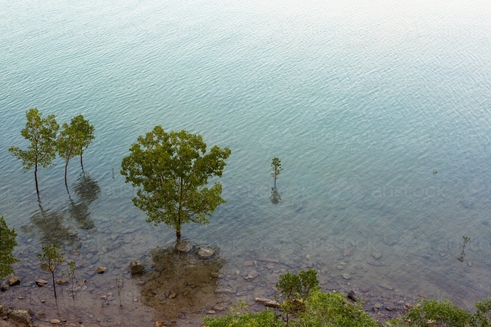 Mangrove trees and their reflections in the ocean off Darwin - Australian Stock Image