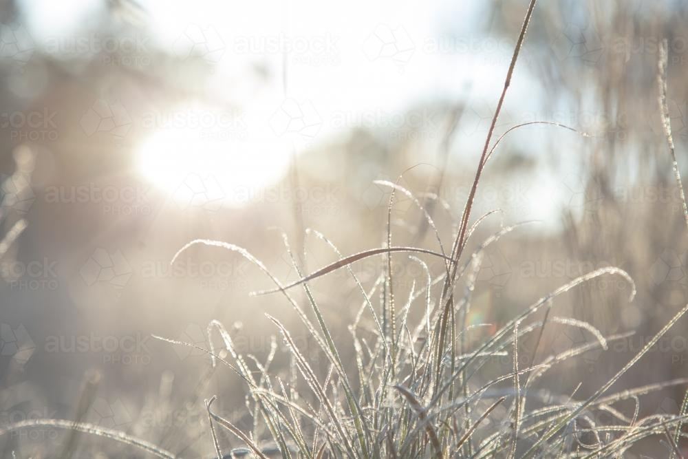 Morning sunlight shining silver off frost covered grass - Australian Stock Image
