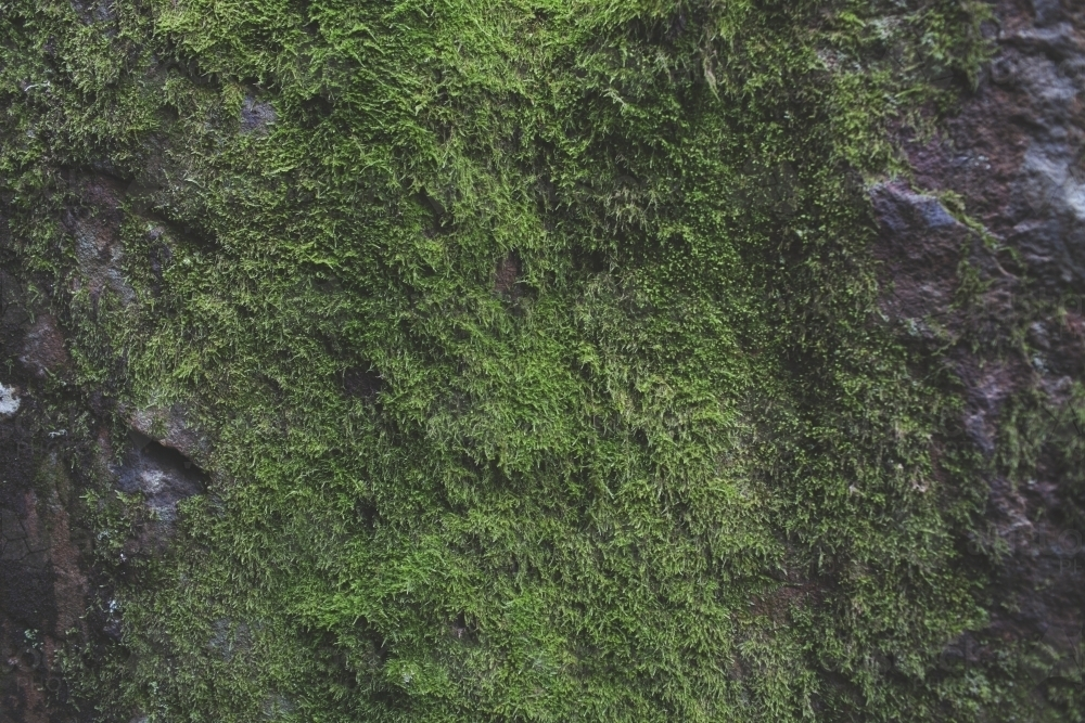 Moss covered rock face - Australian Stock Image