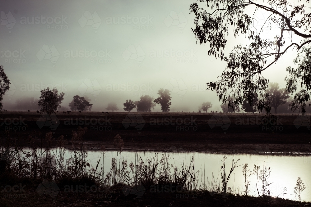 Trees and water silhouetted against mist - Australian Stock Image