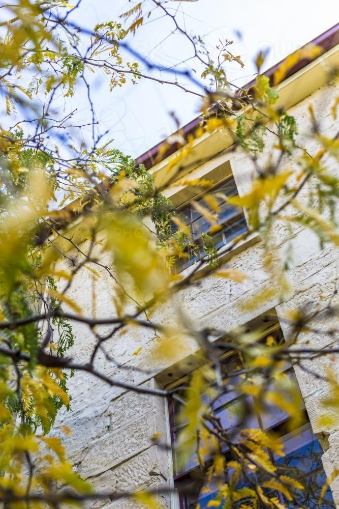 Old sandstone building behind autumn leaves in Salamanca - Australian Stock Image
