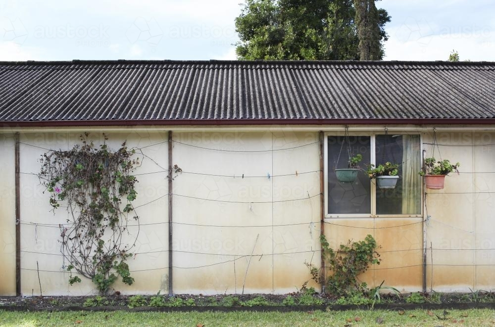 Old shed with a vine - Australian Stock Image