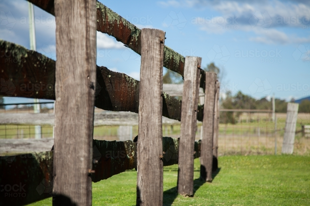 Image Of Old Wooden Post And Rail Farm Fence Of Cattle