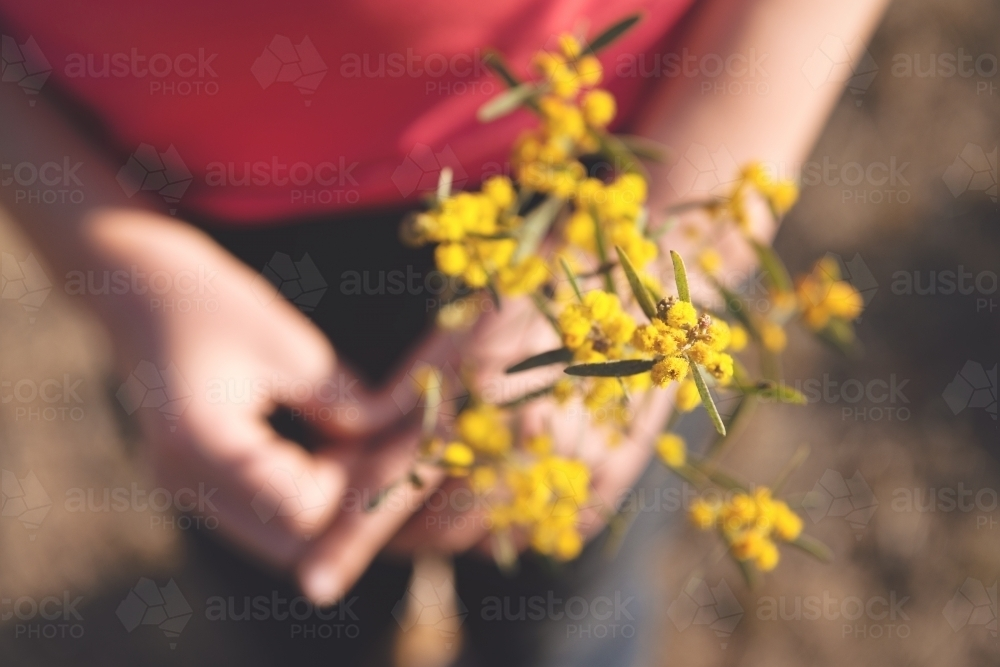 Overhead of wattle with blurred hands - Australian Stock Image