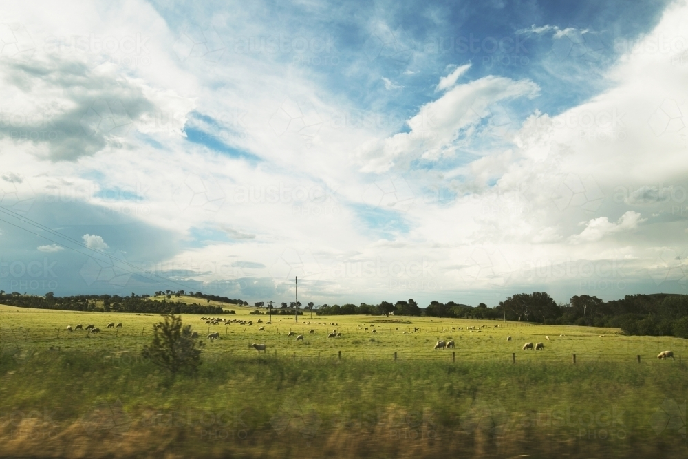 Paddock and livestock on the road from Deni - Australian Stock Image