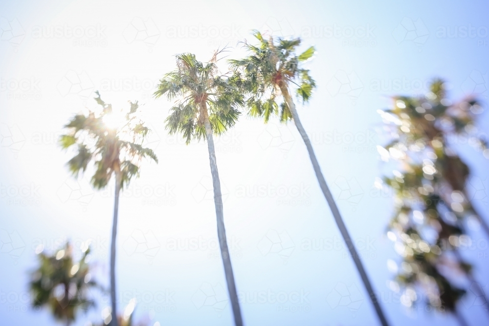 Palm trees against the sun in dreamlike state - Australian Stock Image