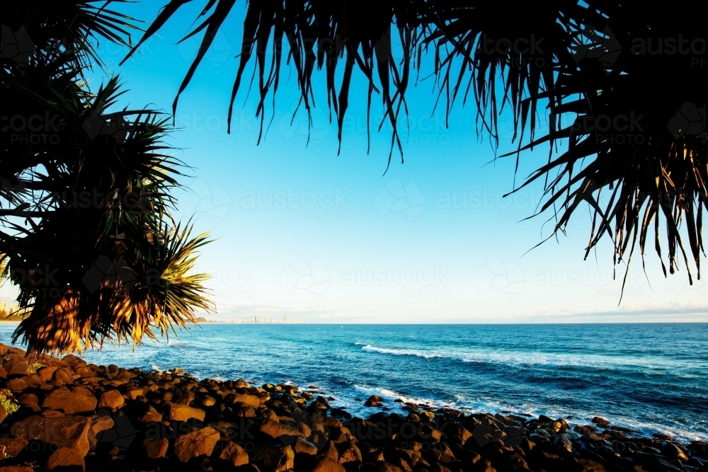 Pandanus frames the view from Burleigh Heads north to the Gold Coast - Australian Stock Image