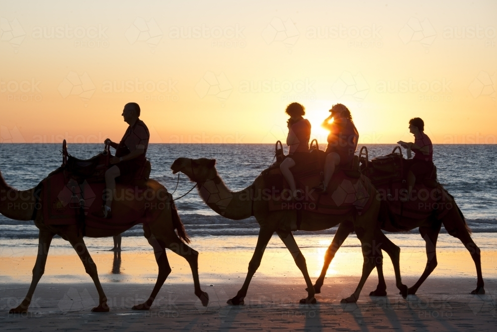 People riding camels on remote beach at sunset - Australian Stock Image