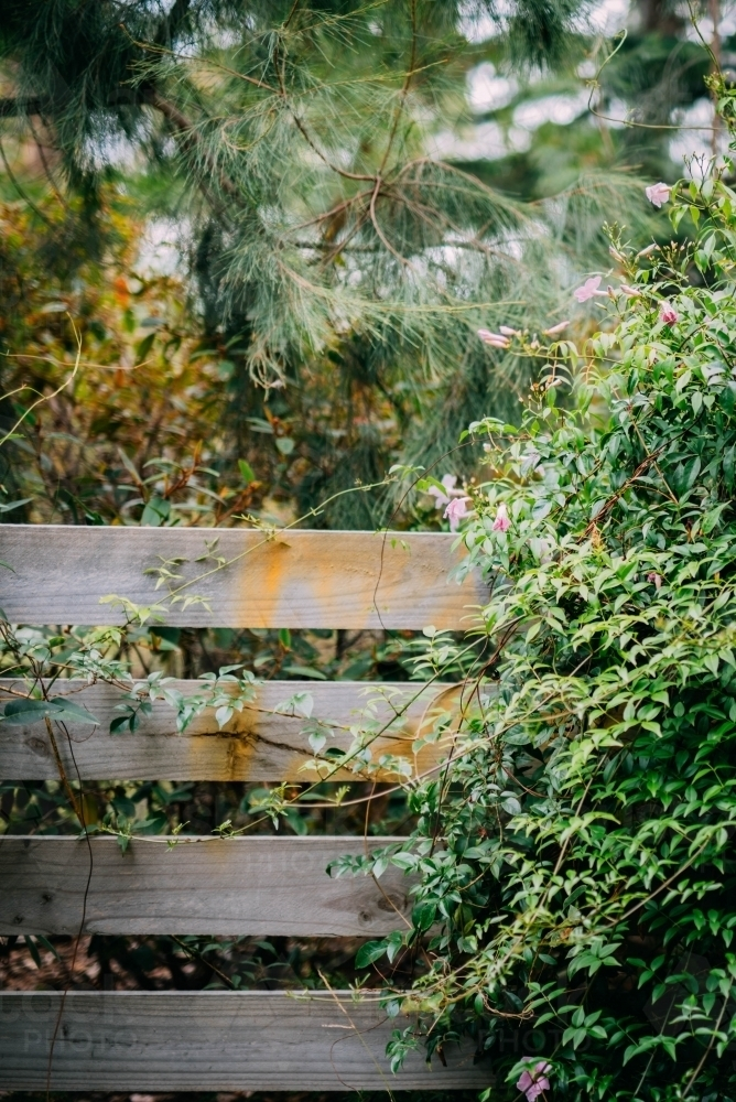Plants growing over a fence - Australian Stock Image