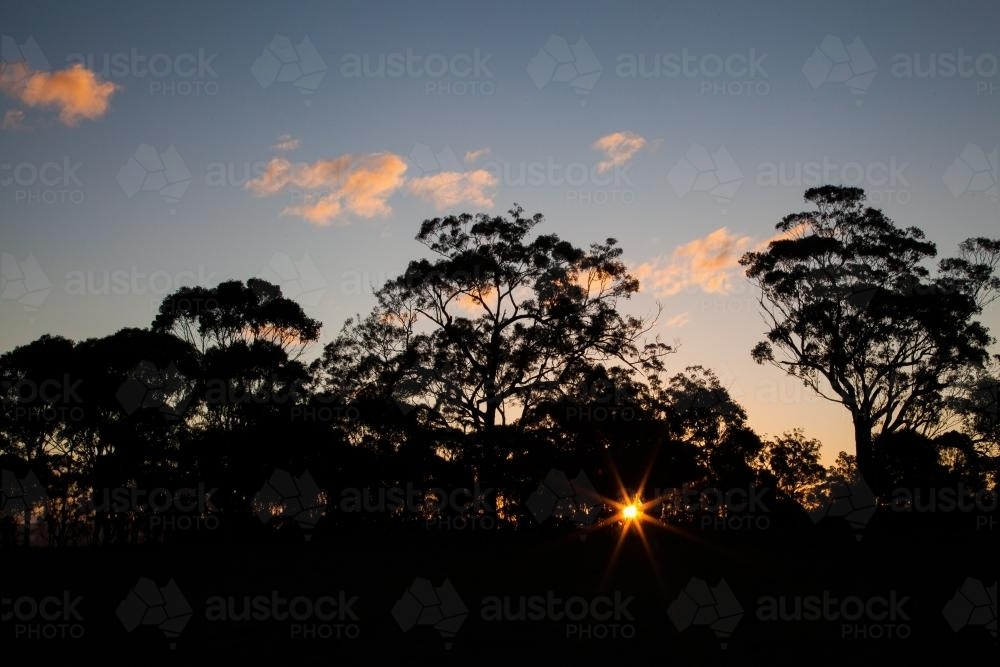 Rays of sunlight shining through silhouettes of trees in paddock - Australian Stock Image
