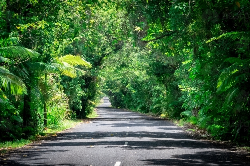 Road through the rainforest - Australian Stock Image