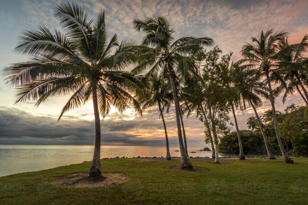 Rows of palm trees along coastline at dawn - Australian Stock Image