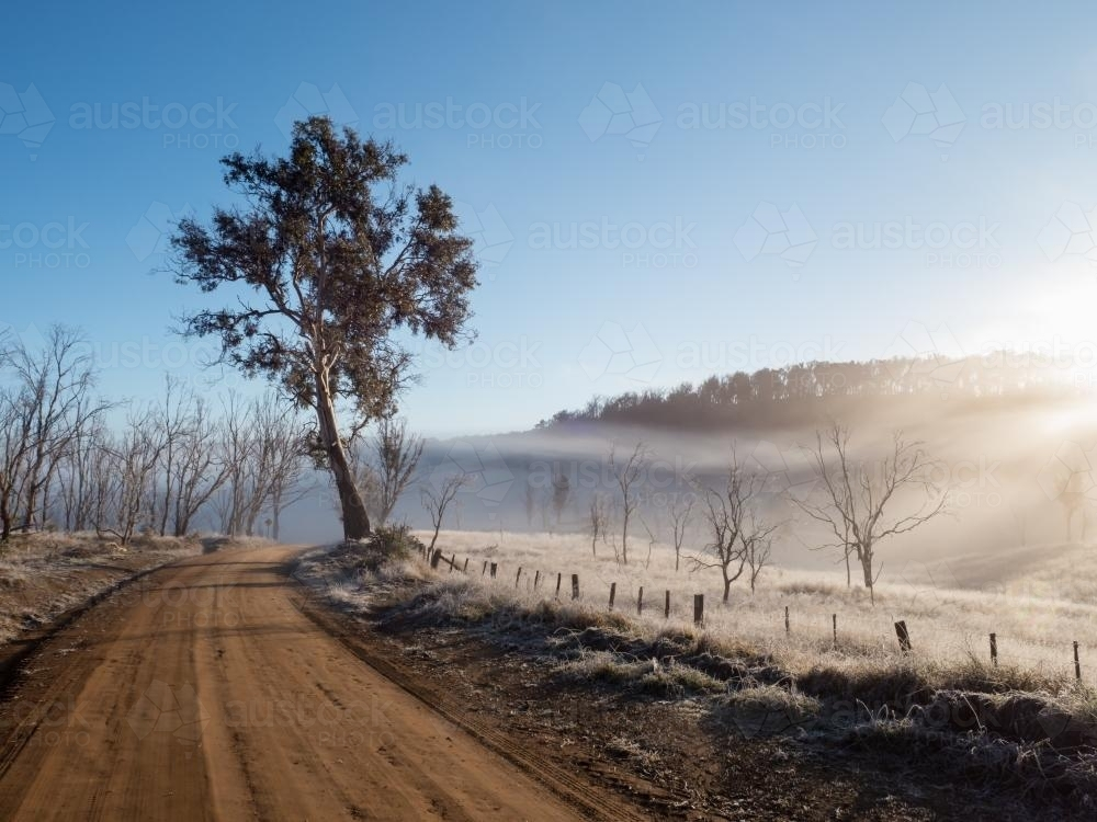 Rural dirt road with tree and early morning mist - Australian Stock Image