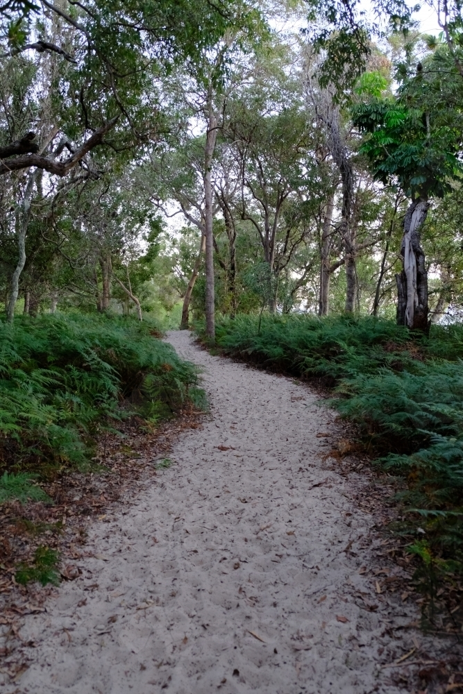 Sand track through the bush on South Stradbroke Island - Australian Stock Image