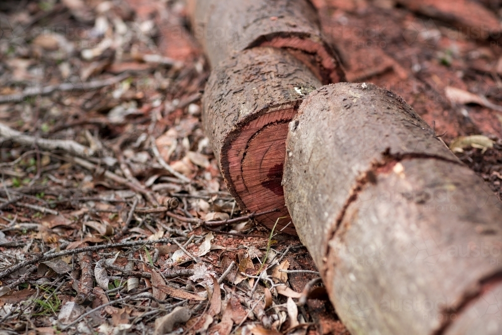 Sawn jarrah log for firewood - Australian Stock Image