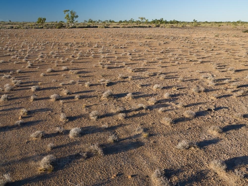Scattered spinifex with long shadows on arid ground - Australian Stock Image