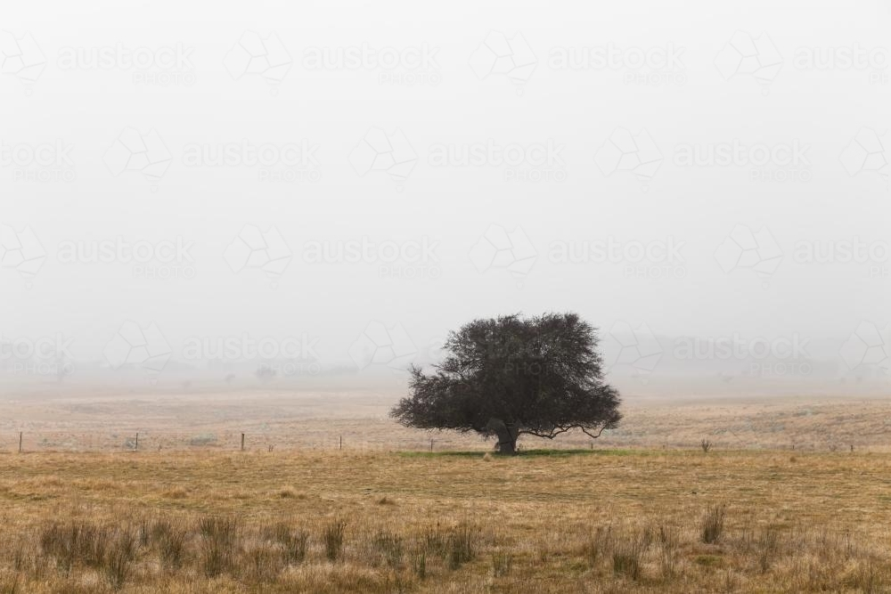 Single tree in remote landscape with mist - Australian Stock Image