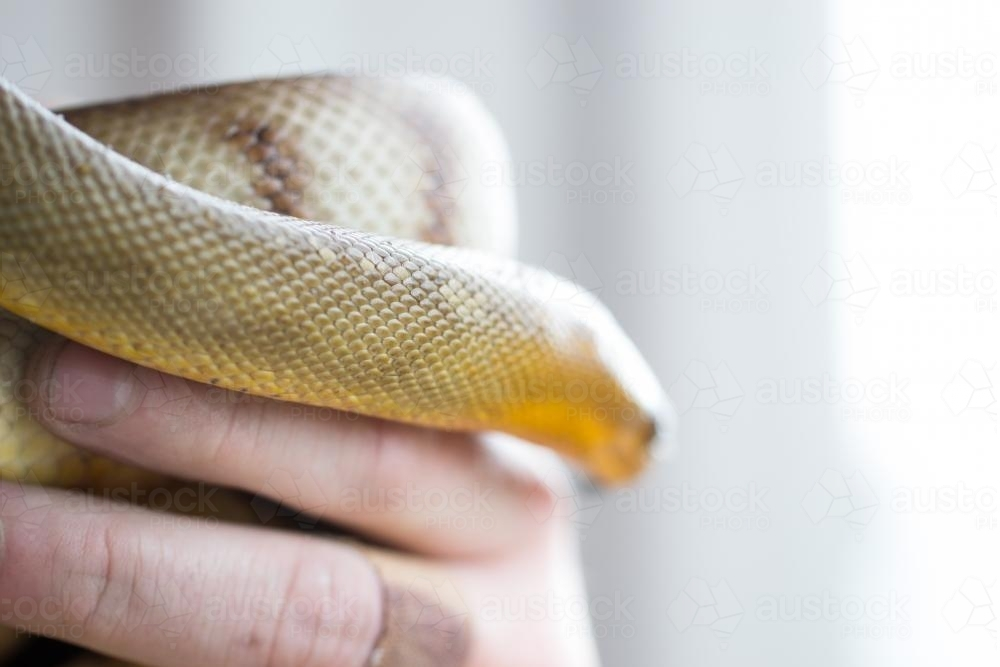 snake scales with hand - Australian Stock Image
