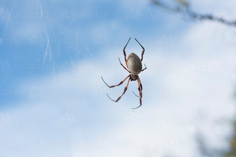 Spider on a web against the sky backdrop. - Australian Stock Image