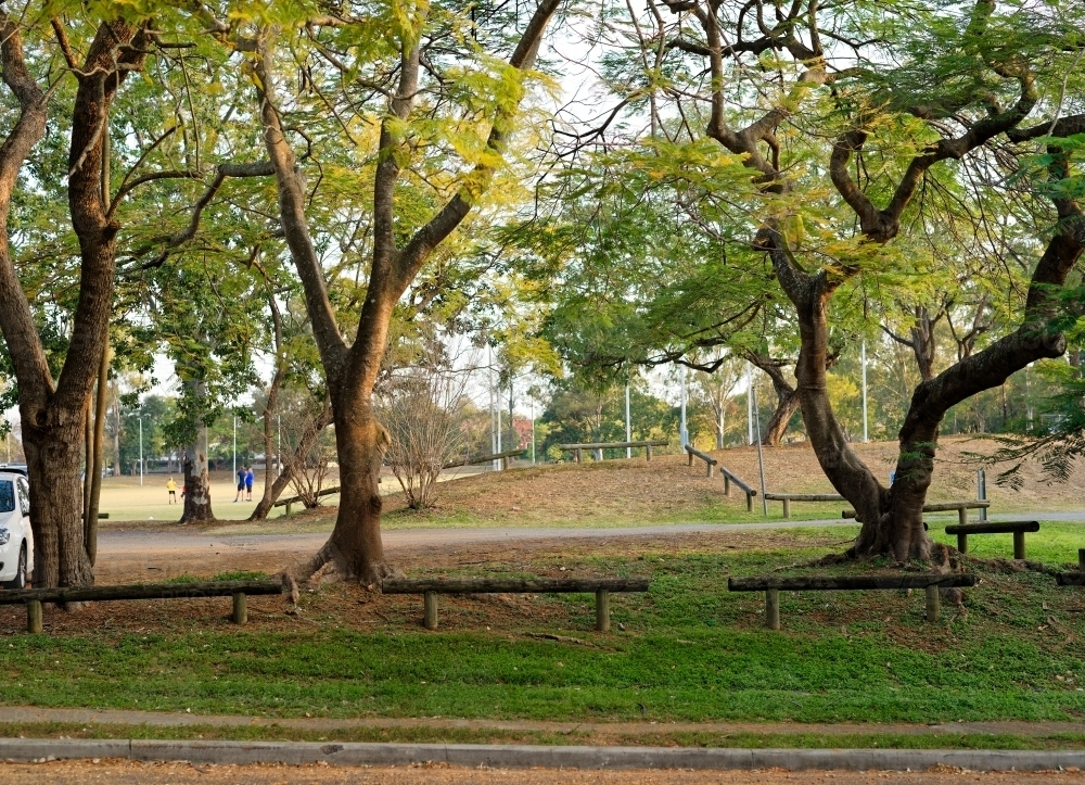Sports field and trees along a street at a park - Australian Stock Image