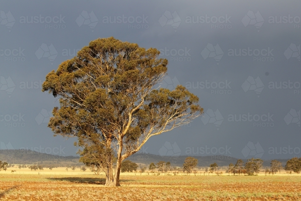 Storm builds behind cropping paddock - Australian Stock Image