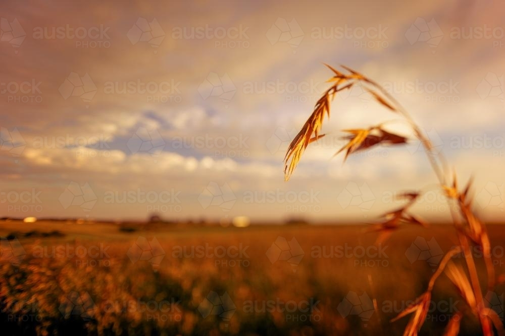 Summer country landscape at sunset - Australian Stock Image