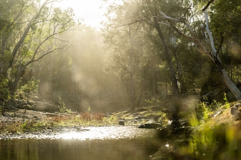 sunlight though the trees and forest beside a creek - Australian Stock Image