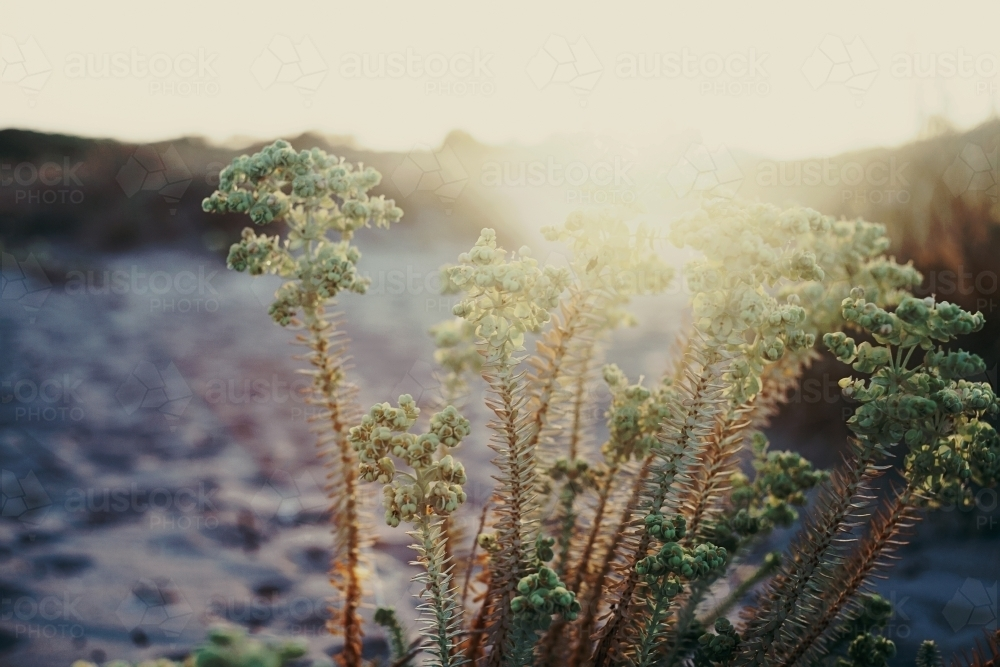 Sunlit coastal shrubs - Australian Stock Image