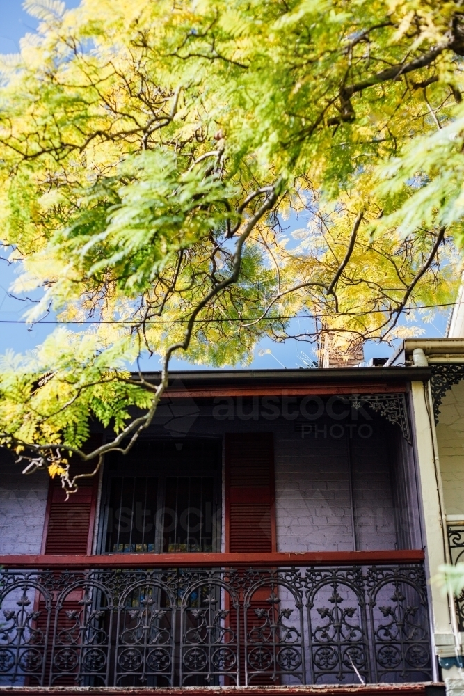 Terrace house window and balcony with bright branch of leaves hanging over - Australian Stock Image