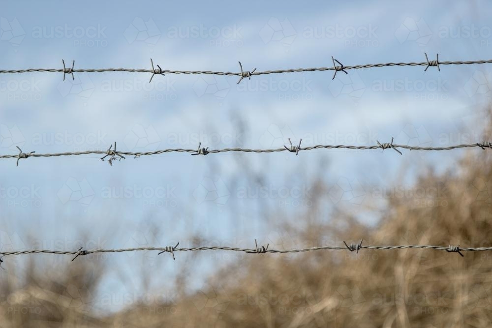 Image of Three strands of barbed wire - Austockphoto