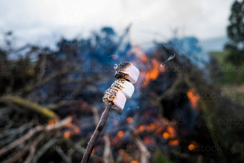 Toasted marshmallow on a stick bubbling and smokey - Australian Stock Image