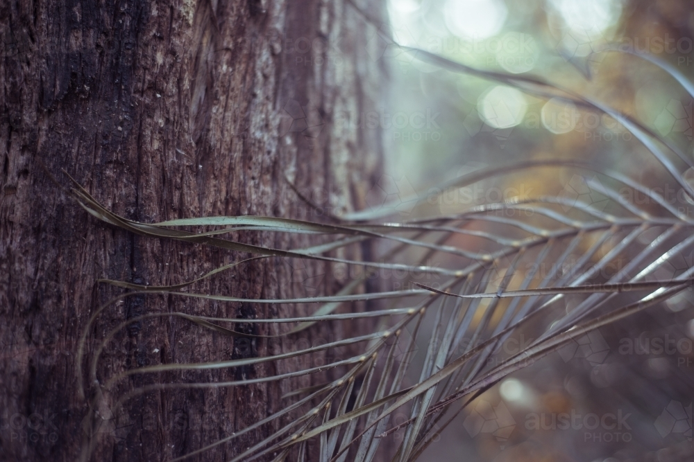 tree frond and trunk in forest - Australian Stock Image